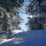Winterwald am Baumgartenschneid