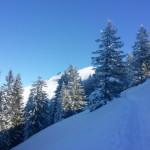 Kurz vor dem Gipfel des Baumgartenschneid